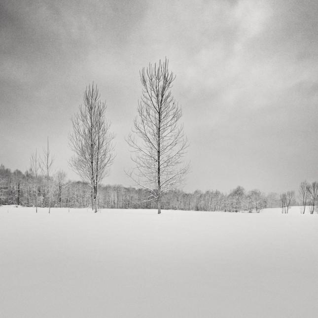 Silver birch    21x21cm