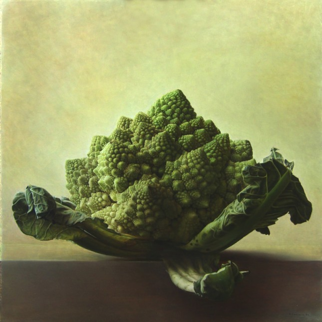 archimedes turtle (300dpi) 50 x 50