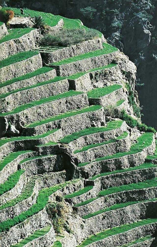 33-Canyon-Walls-of-Jebel-Akhdar-in-Oman-Sept1981