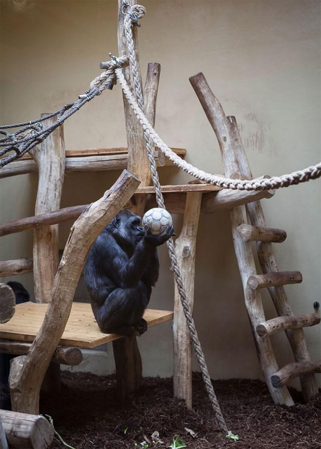 Sad-Images-at-Berlin-Zoo3- Elias Hassos