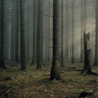 Deutscher_Wald