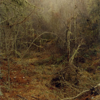 Highland Homeland by Harley Weir